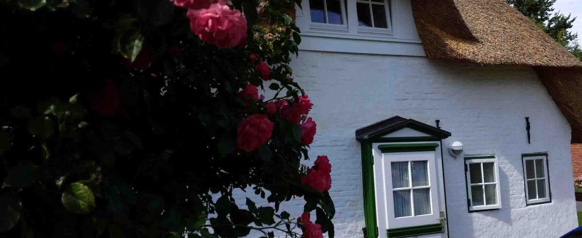 Rosenblüte - Eingang zu den Gästezimmern, © Gerd Arnold
