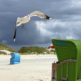 Fliegende Möwe Amrum, © Klaus Behlich