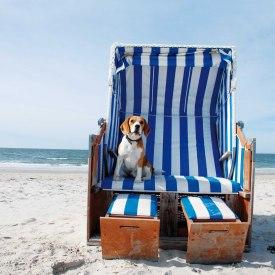 Amrum Hund im Strandkorb, © KQuedens