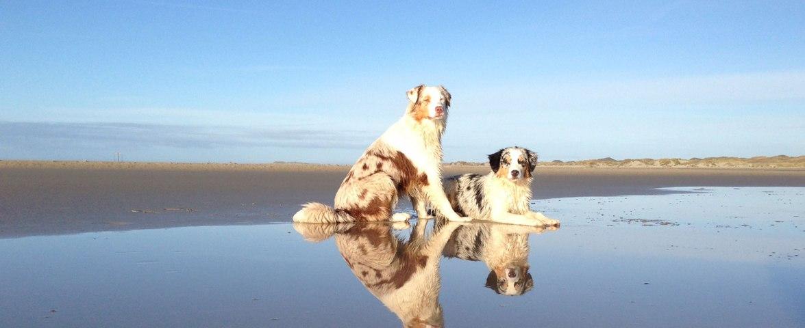 Hunde Strand Amrum, © Kinka Tadsen