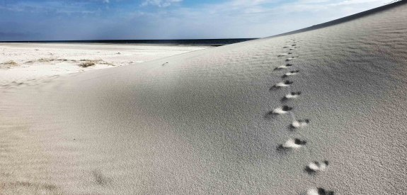 spuren-im-sand, © Stephanie Wörner