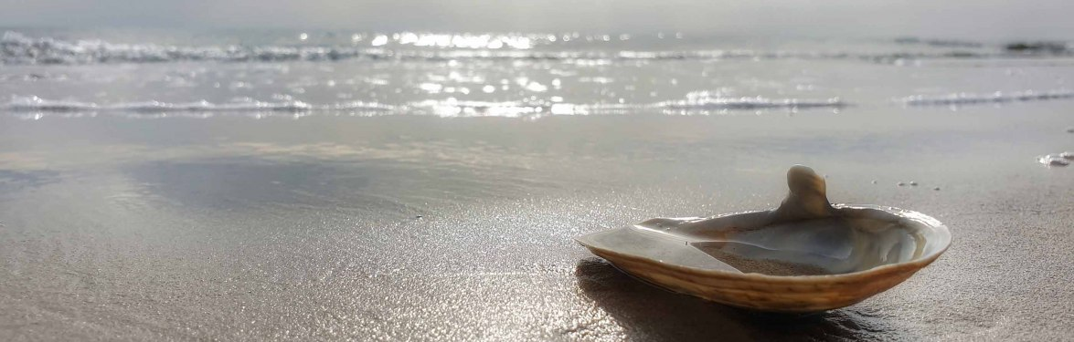 Muschel-am-Strand-von-Amrum, © Stephanie Wörner