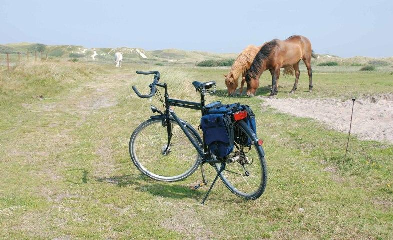 Rad-und-Pferde-auf-Amrum, © KQuedens